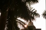 Palm leaves and Sun on Temple roof_Sarnath.jpg